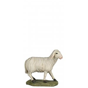 6630 - Sheep looking (Maple)